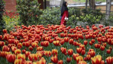 تصویر باغ ايرانى در تهران